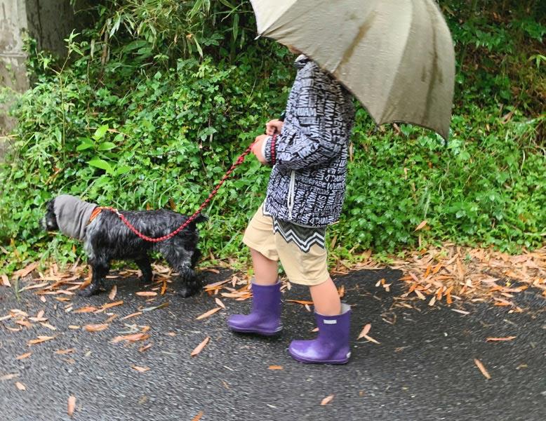 画像2: 雨の日は「散歩に行きたくない」?