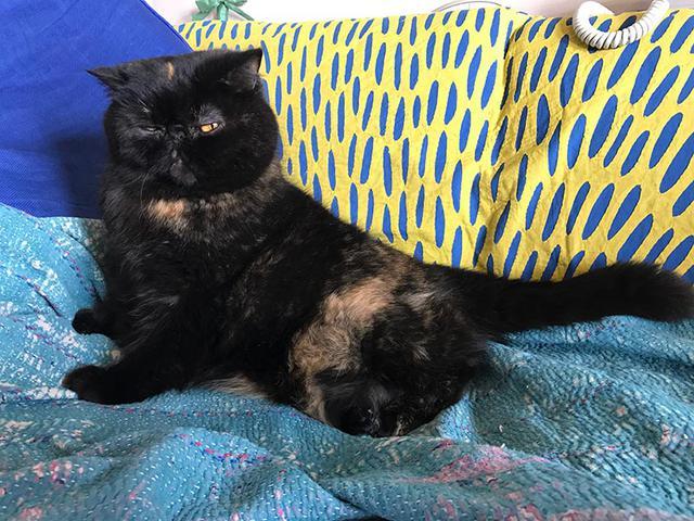 画像1: 我が家の猫、紅子