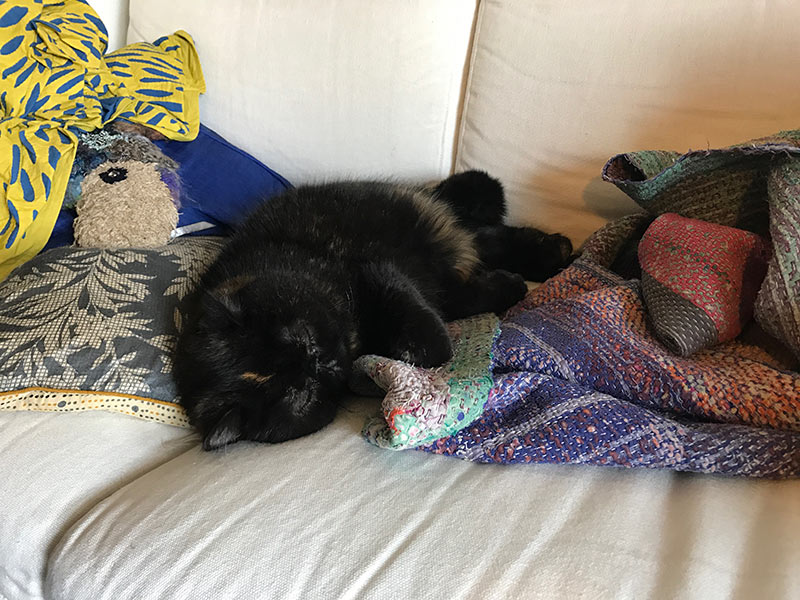 画像3: 我が家の猫、紅子