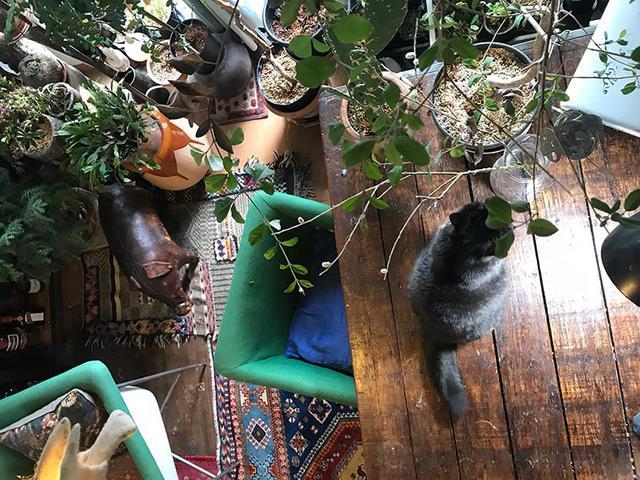 画像8: 我が家の猫、紅子