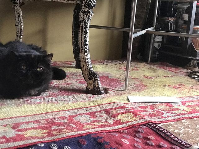 画像2: 我が家の猫、紅子