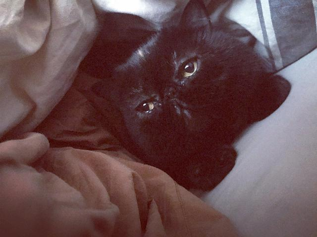 画像6: 我が家の猫、紅子