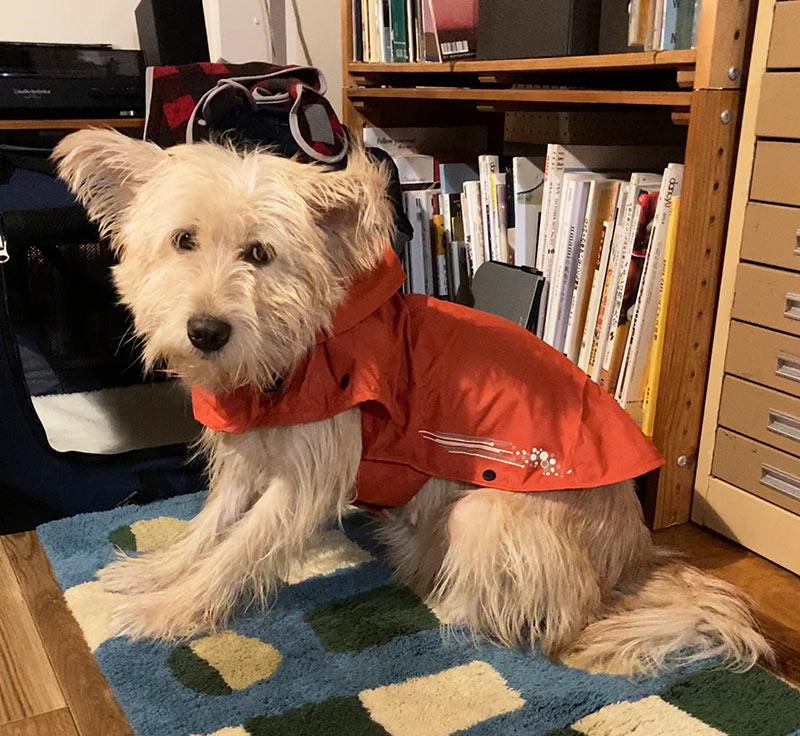 画像: 雨でも散歩に行けるようにカッパ購入