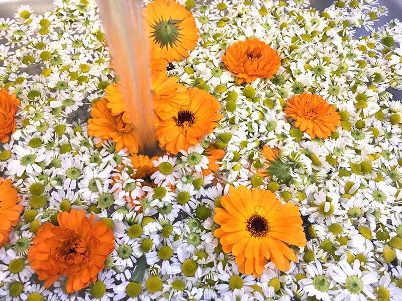 画像: 花の洗い方