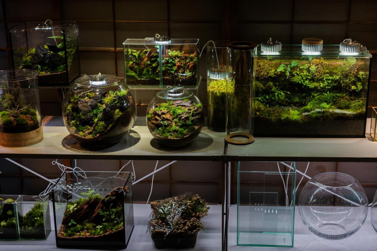 画像: お店ではテラリウム作りに適したガラス容器や道具のほか、園田さんが作成されたテラリウムを購入することもできます