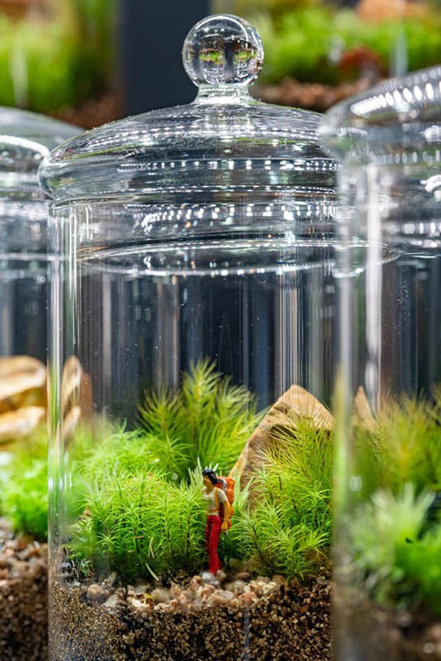 画像: 瓶の中でハイキング