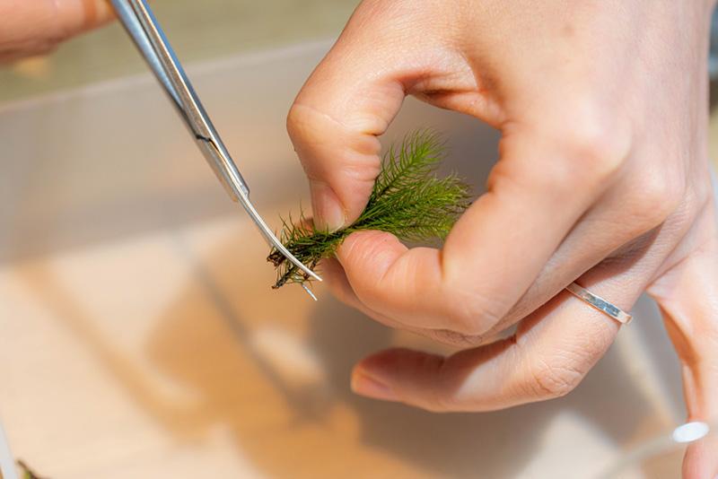 画像: 種類ごとにこけをつまんで小さな束をつくったら、長さをそろえてミニバサミでカットします