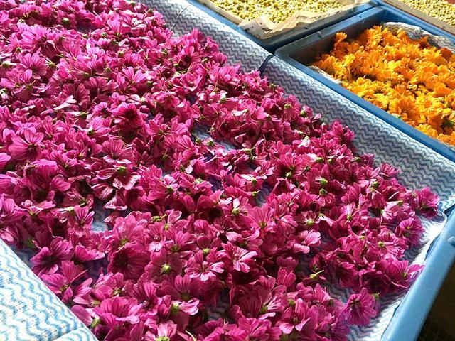 画像3: 花を乾燥させる方法