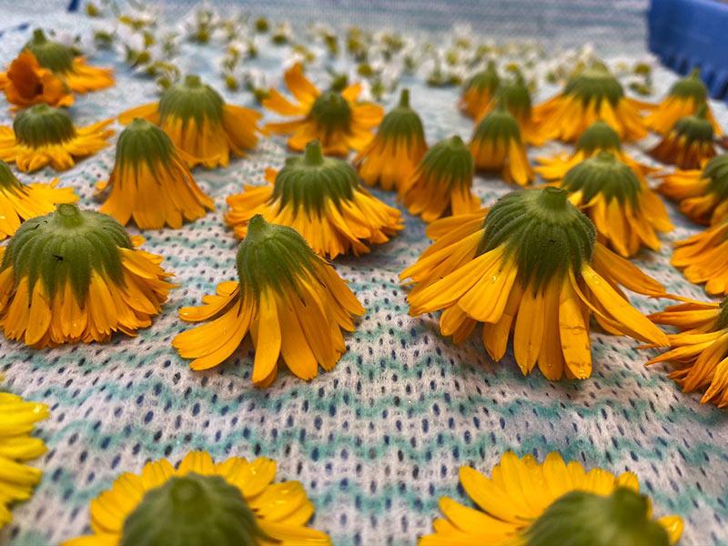 画像1: 花を乾燥させる方法