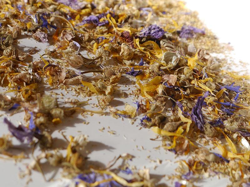 画像2: 花を乾燥させる方法