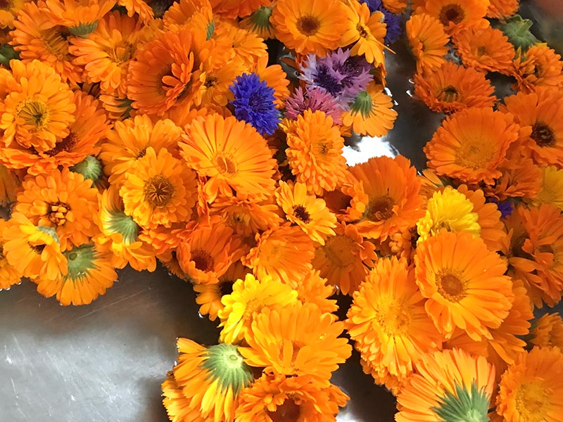 画像: 花の摘み方