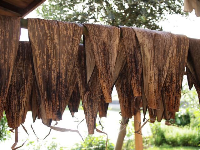画像: 採取した竹皮は、熱湯につけて殺菌し、その後に洗って広げて天日干し。干している竹竿も採取させてもらった破竹