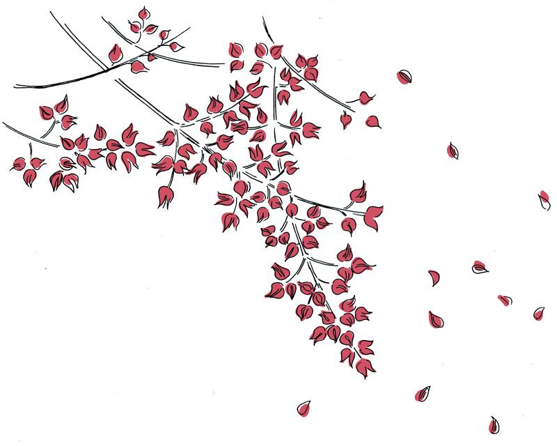 画像: 7月23日から7月27日ごろ 大暑初候・ 桐始結花[きりはじめてはなをむすぶ]