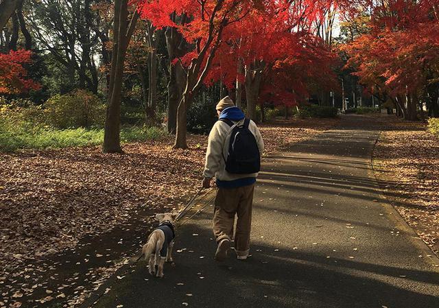 画像: 紅葉の中散歩するのは気持ちいいものです