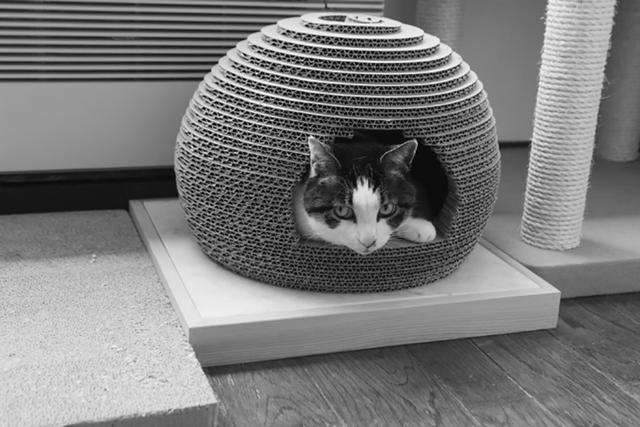 画像: ドーム形の猫ベッドにすっぽり。ご機嫌の福助