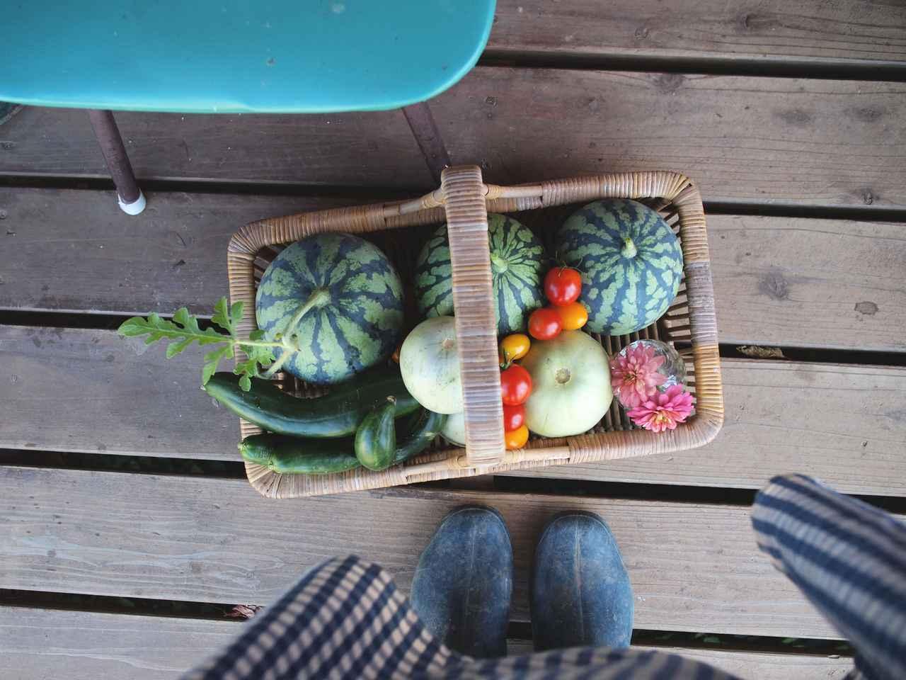 画像: スイカやメロンなど、庭で採れた野菜たち