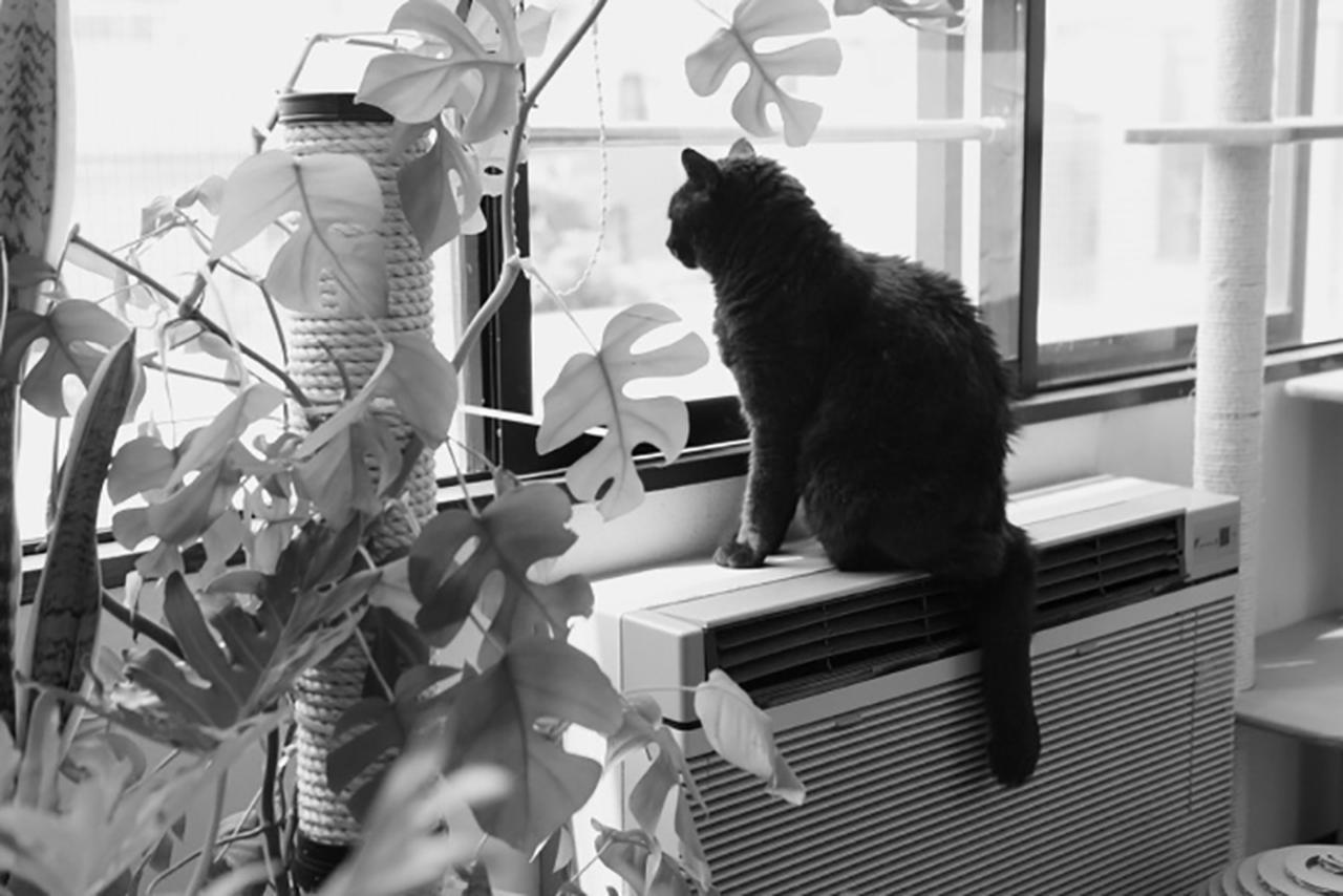 画像: ヒーターに飛び乗り窓の外を監視中の玖磨