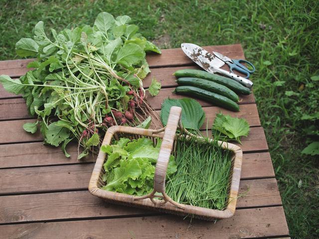 画像: この日は、ラディッシュのほか、リーフレタス、にら、えごま、青しそ、きゅうりなども収穫