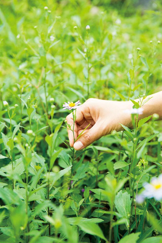 画像1: 草と出会う