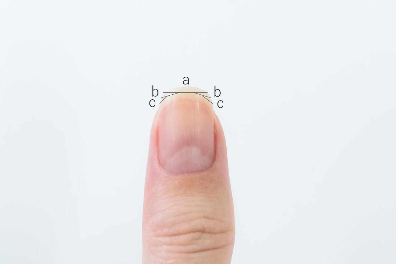 画像: 写真にある(a)(b)(c)の部分にわけて切る
