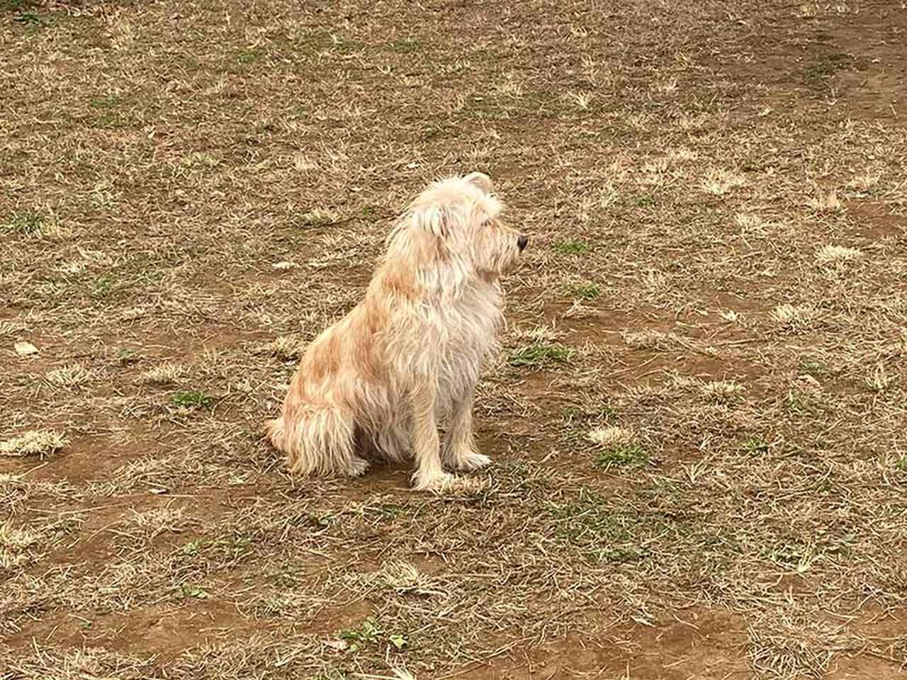 画像: 洋画に出てきそうな野良犬感