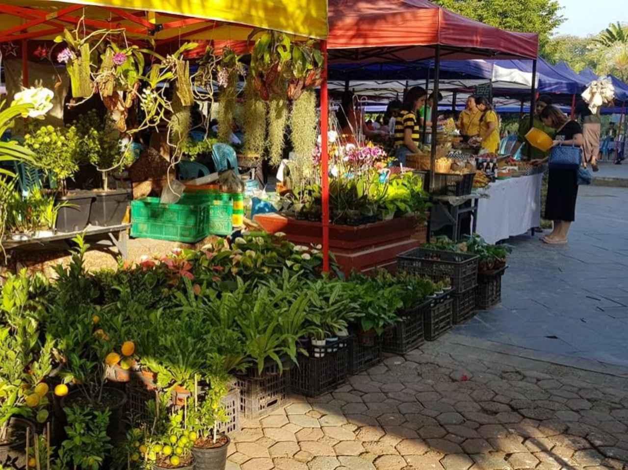 画像: 野菜は、生産者の農家さんが直接売っていてフレッシュでおいしいものばかり。日本では貴重な蘭も数百円で買える身近な存在