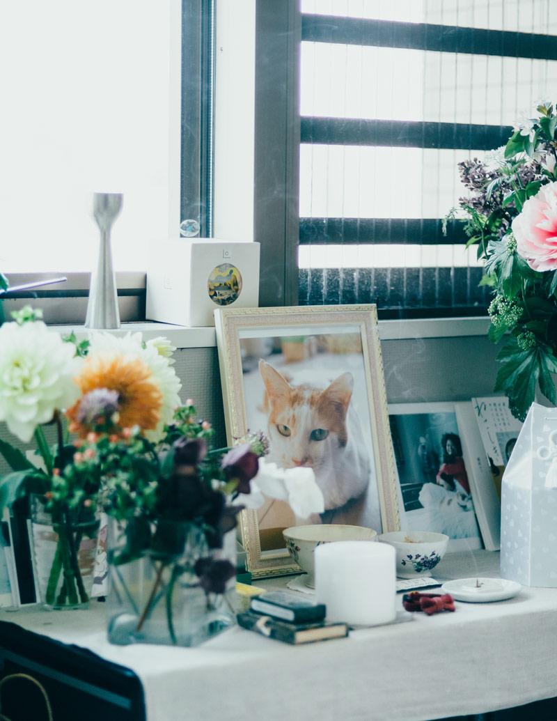 画像: 路上で保護した猫のイオ。猫沢家で1年半の幸せな時間を過ごし、天国へ旅立った