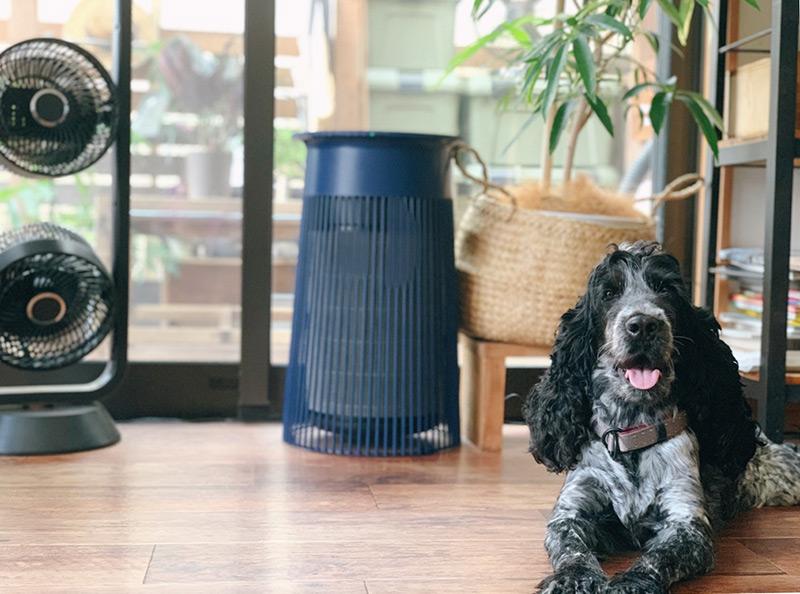 画像1: 犬は人間より暑さに弱い