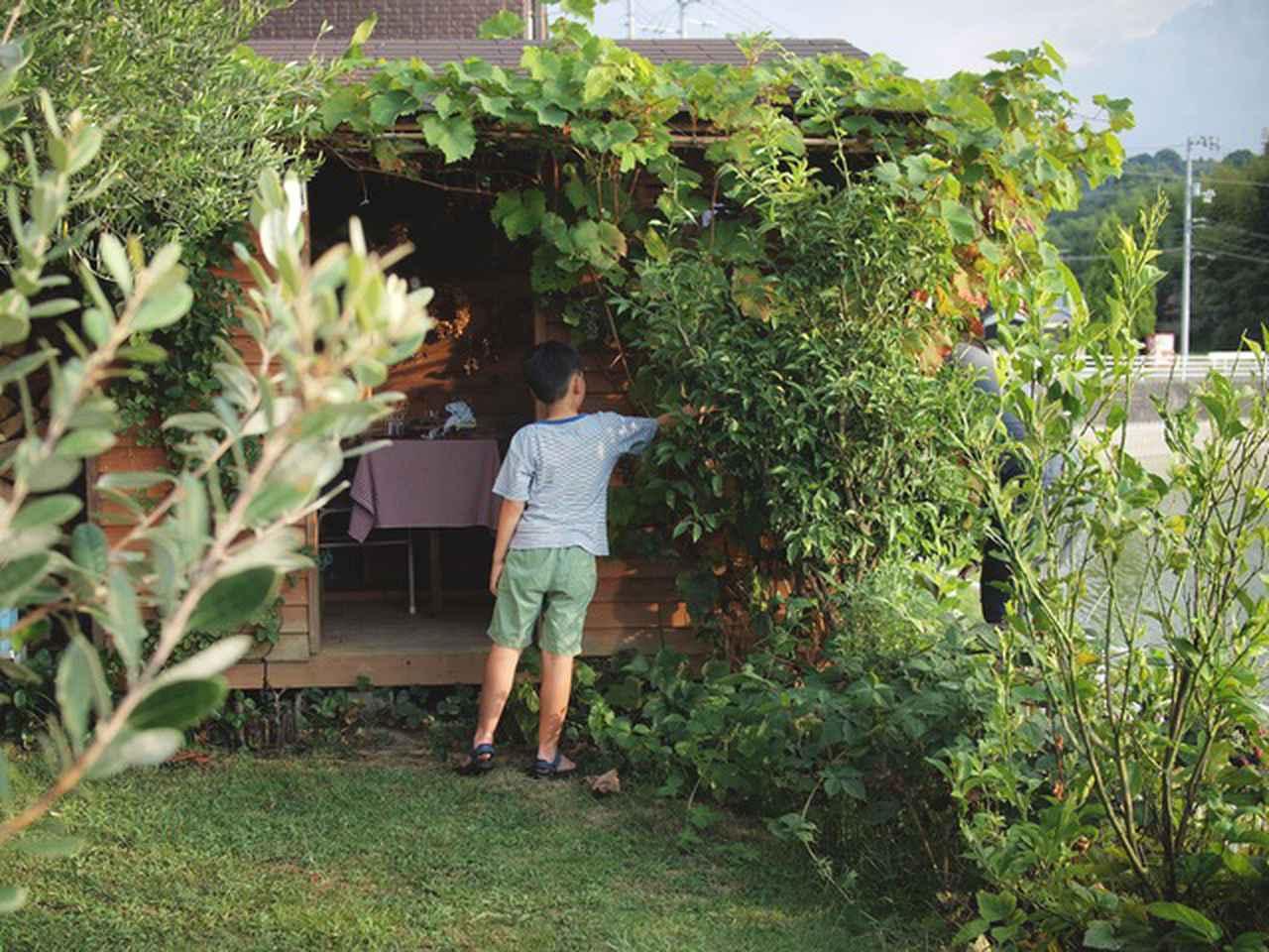 画像: 夫がしげみの奥のブドウを収穫して、息子がかごでキャッチ。ブドウの葉は秋にきれいな紅葉を見せてくれて徐々に落葉していきます
