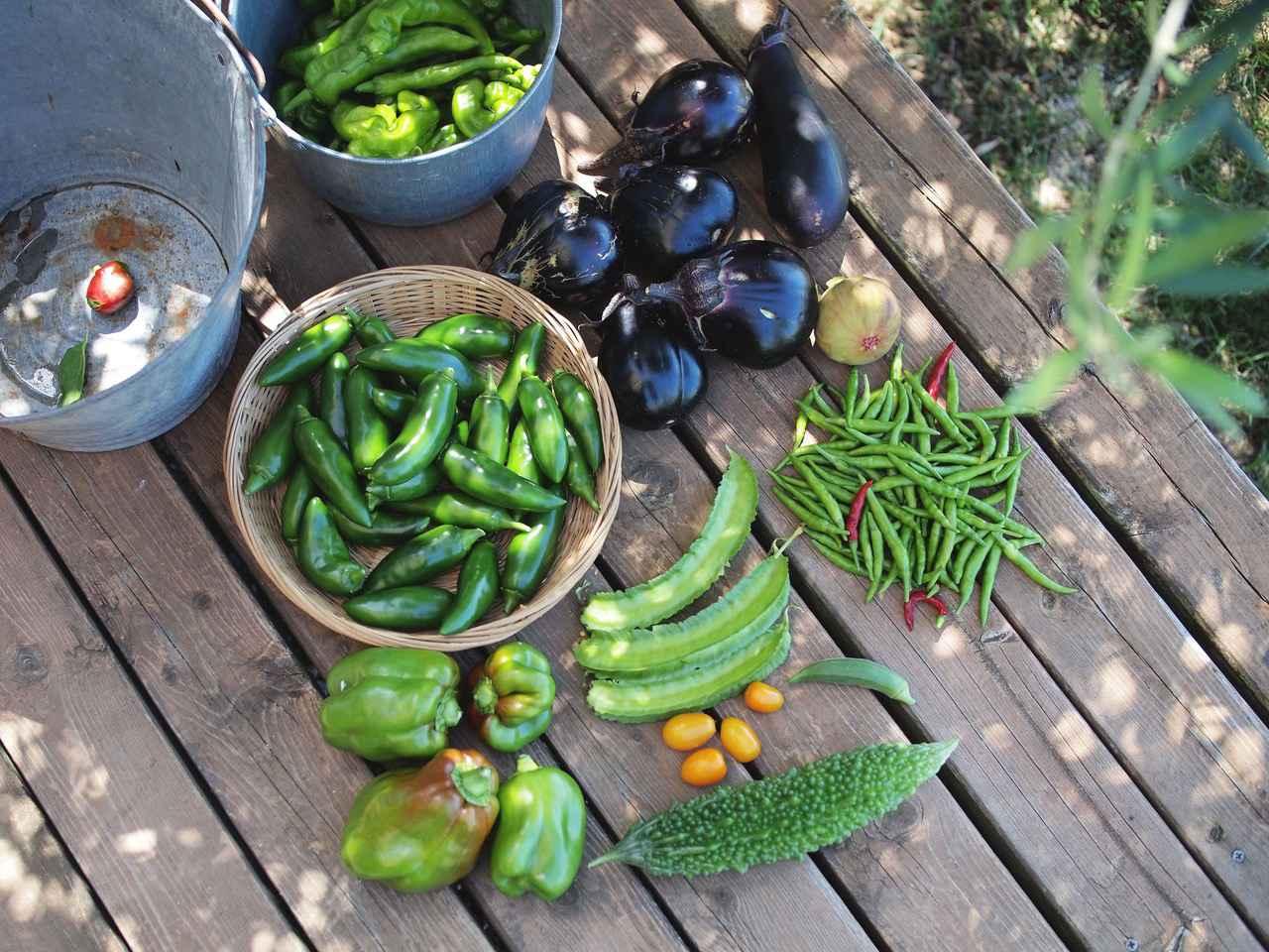 画像: この日採れた夏野菜たち。青とうがらしや水なすなど、かごの中は「ピー太郎」という名の苦みが少ないピーマン