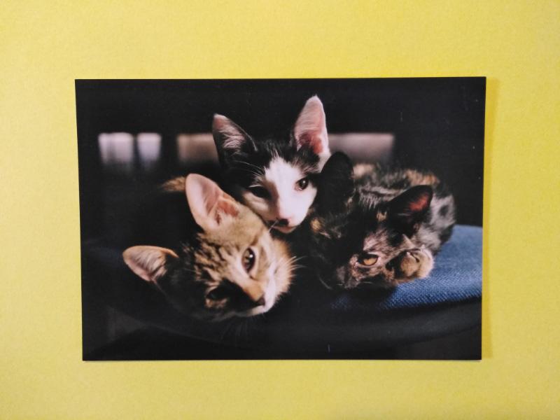 画像: チビが連れて来た3匹の仔猫、左から、トコ、イシ、クーチャ