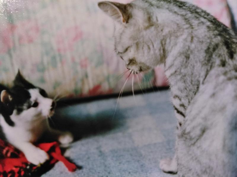 画像: イシをたしなめるチビ