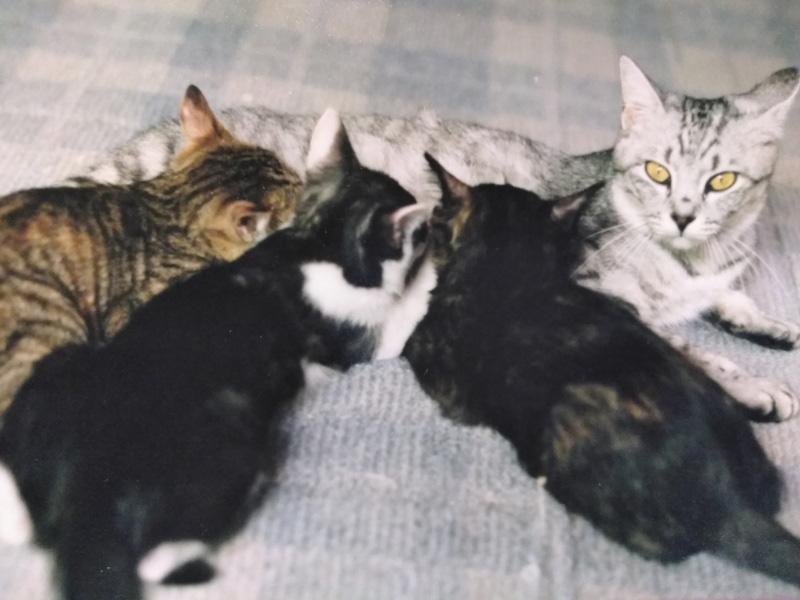 画像: もうかなり大きいのに乳ばなれしない仔猫たち