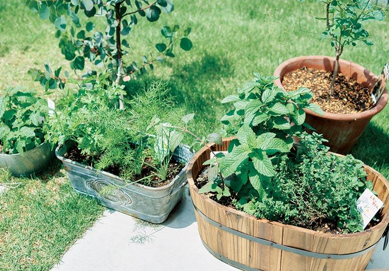 画像: 玄関先や家庭菜園でハーブを育てる
