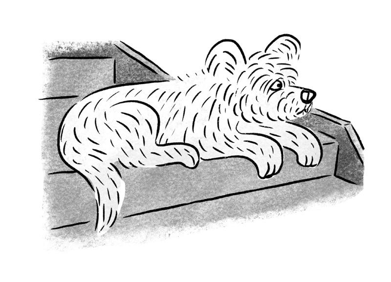 画像: デザイン事務所の看板犬