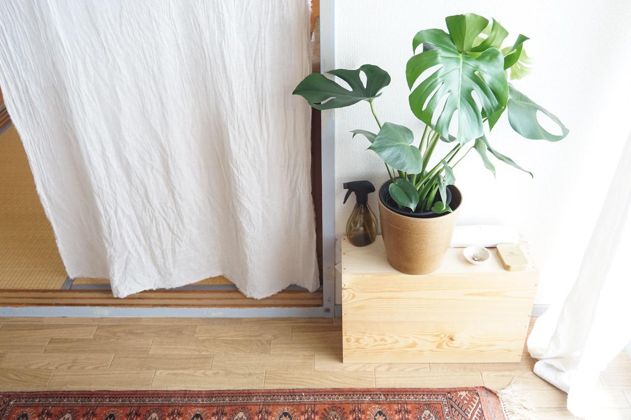 画像1: ウンベラータを新たに迎えた、植物のある暮らし