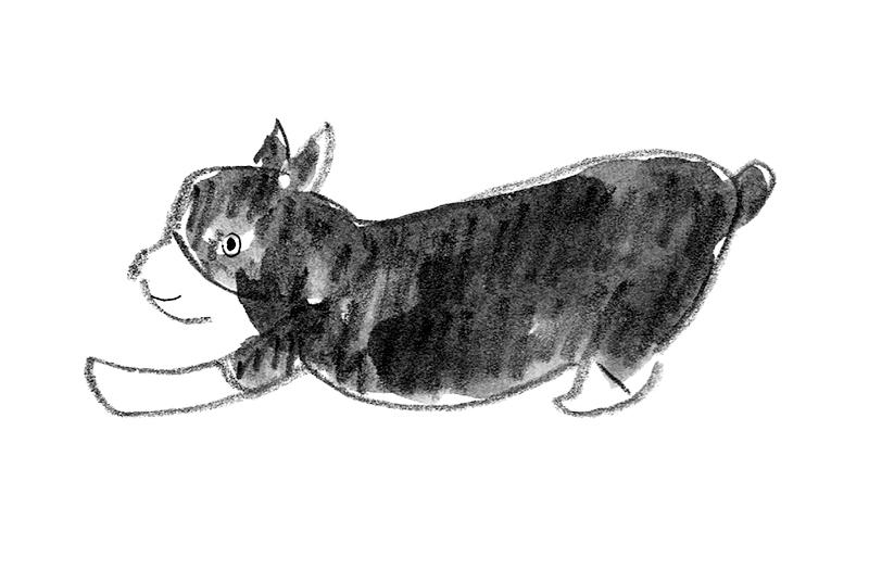画像: 愛犬は立てる? 歩ける? 寝たきり?