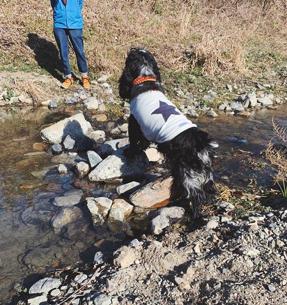 画像: 水嫌いのはじめての「川遊び」