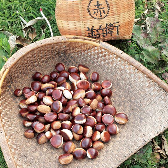画像: 収穫かごに書かれた「善兵衛」とは、赤倉家の屋号。別名「善兵衛栗」とも呼ばれている