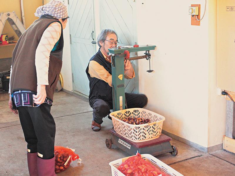 画像: 「栗の収穫時期は人手が足りないので、地元の女性たちに、栗拾いと選別、皮むきの作業をお願いしています」と、赤倉さん。一日の栗拾いが終わったら、はかりで重さを量って報酬をお支払い