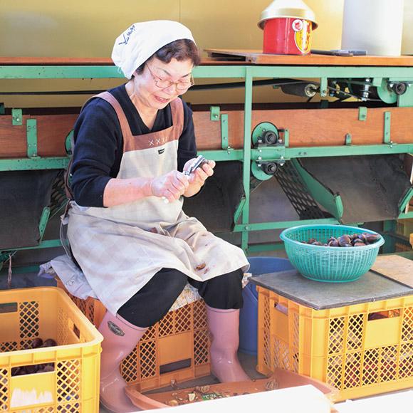 画像: 工場の中で行われている、加工品用の栗むき。堅い栗の皮を、するすると慣れた手つきでむいていく