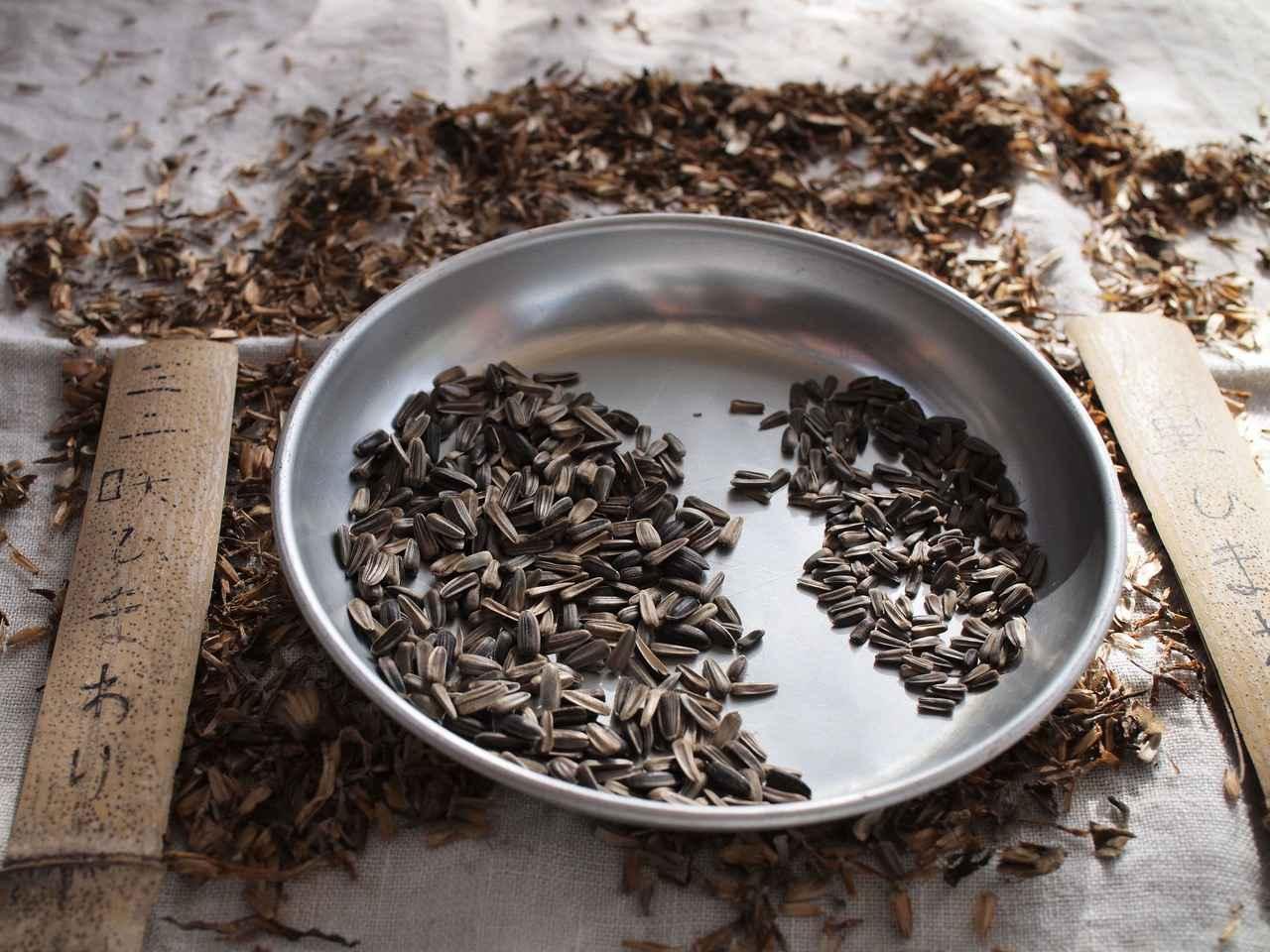 画像: 野鳥たちが、小さな種の方が食べやすいかな、と、ミニのひまわりの品種を2種類育てています