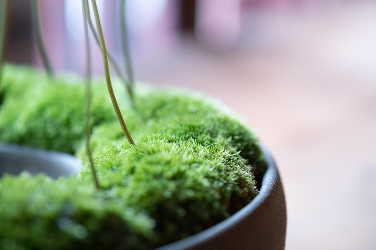 画像: 草と本