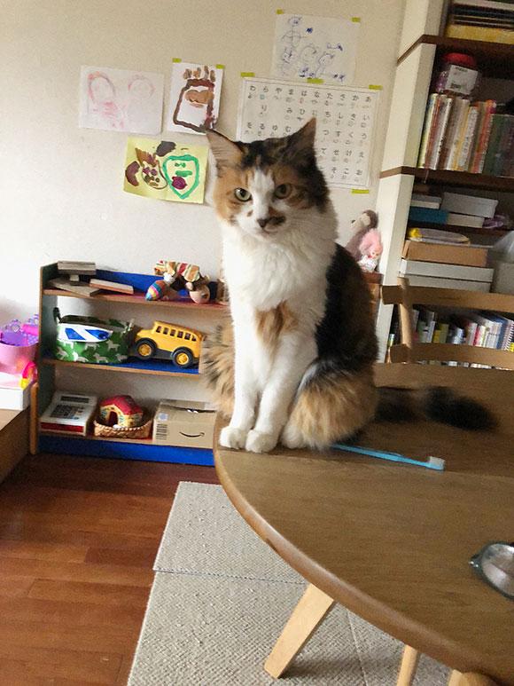 画像: 東京の子ども部屋で。うめ