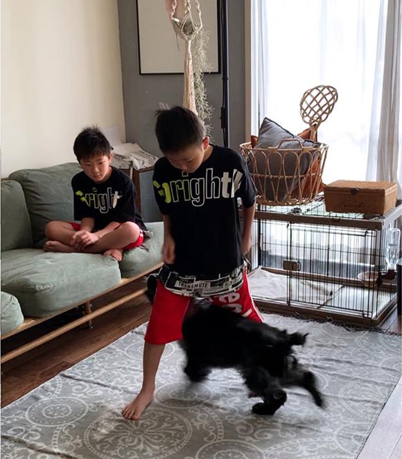画像1: しつけ⑤ 「スルー」「ジャンプ」、コミュニケーションに効果的な遊びのトレーニング