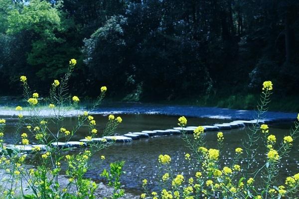 画像: 画像:バーベキュー場と嵐山渓谷中心部を繋ぐ飛び石。 www.town.ranzan.saitama.jp