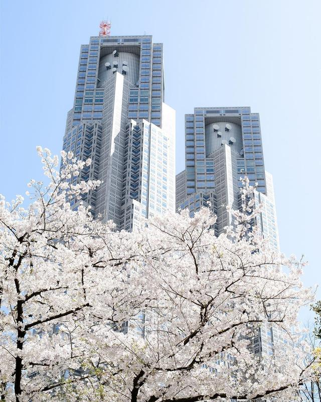 画像1: 東京都庁広報課 PR section of TokyoさんはInstagramを利用しています:「「桜満開 新宿都庁前/Shinjuku TMG」」 www.instagram.com