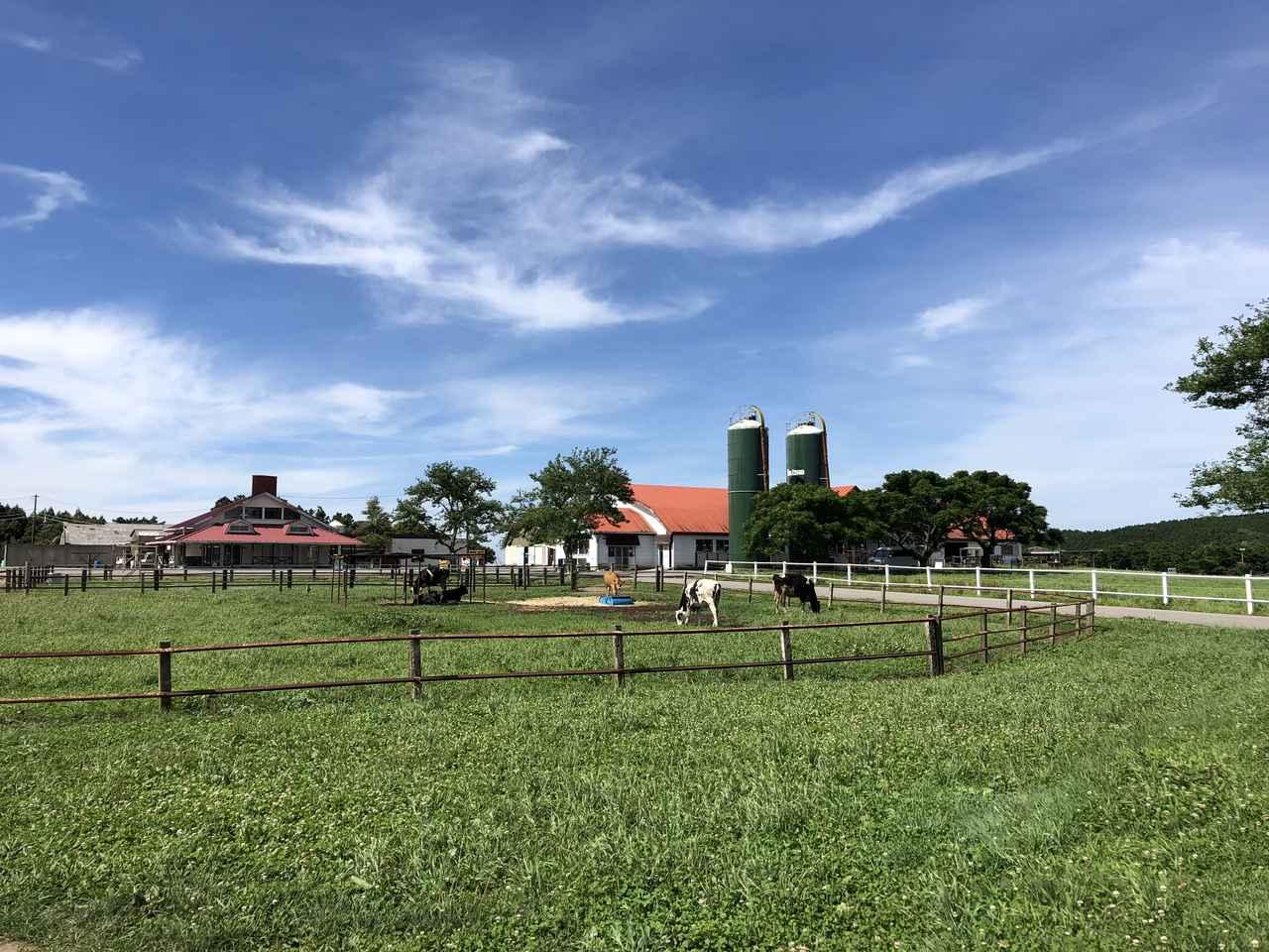 画像3: そんなこんなでマザー牧場に到着!