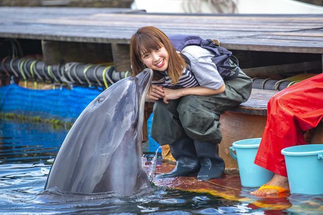 画像4: イルカとのふれあいタイム