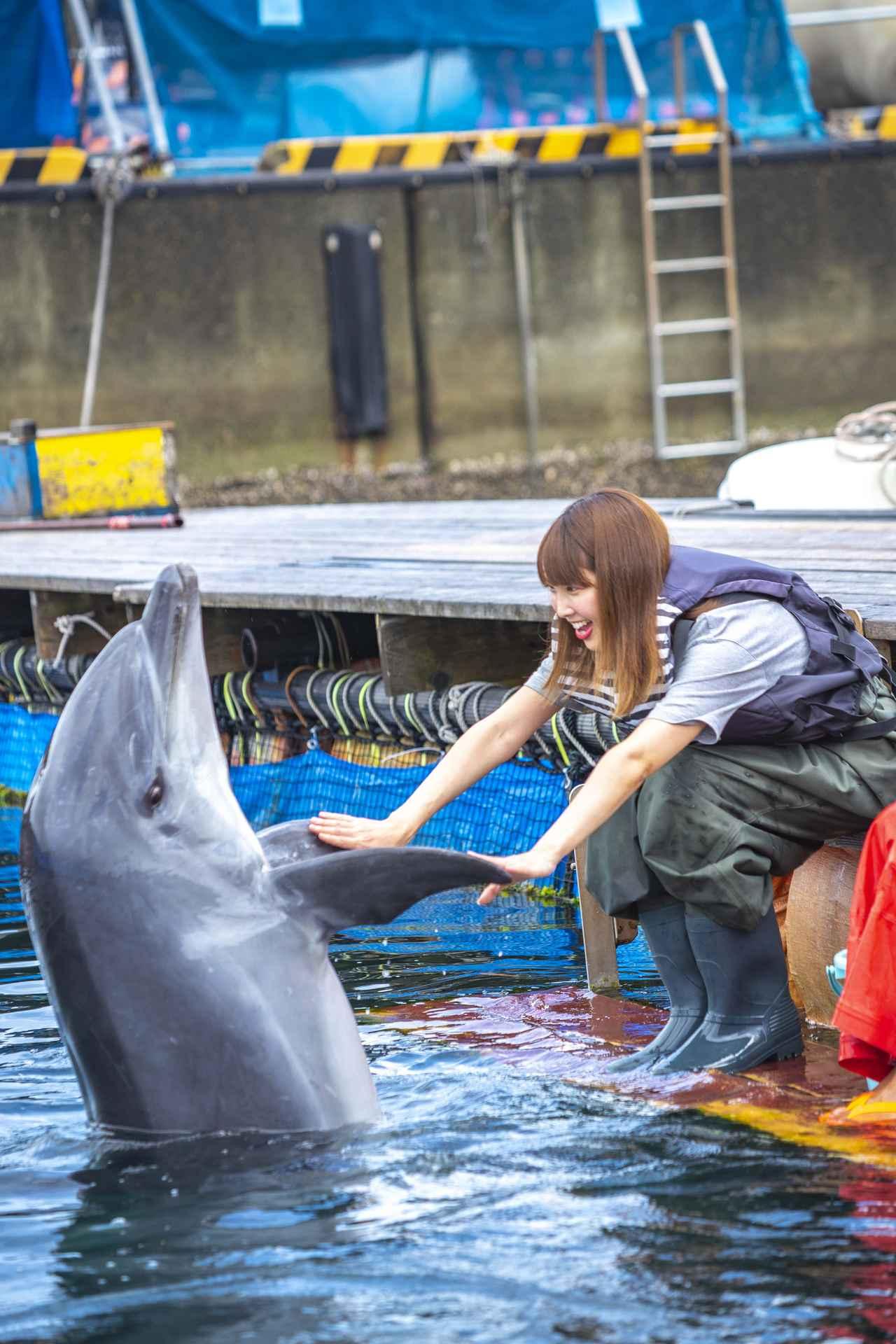 画像2: イルカとのふれあいタイム